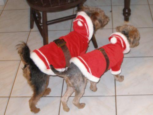 Santa dog 015